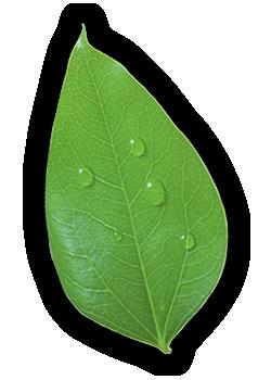 leaf clean 1 - Strona główna