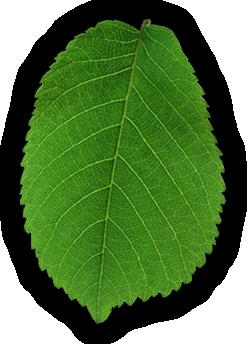 leaf clean 2 - Strona główna