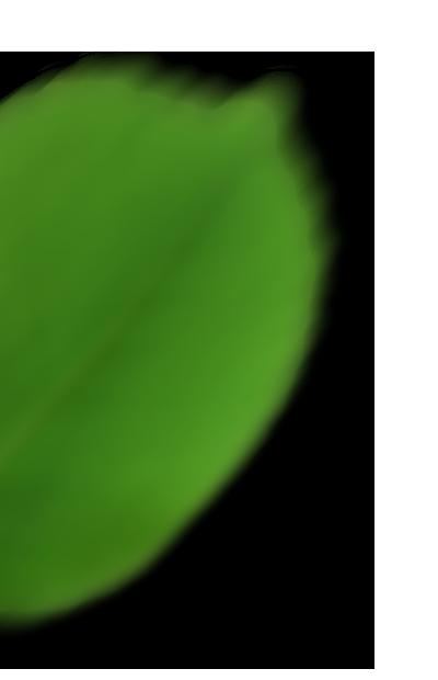leaf left - Moje usługi